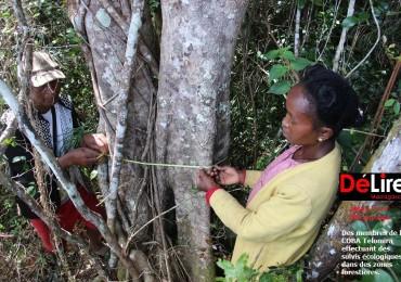 Des membres de la COBA Telomira effectuant des suivis écologiques dans des zones forestières.